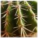 Иглы кактуса (в наборе 10 шт.)