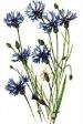 Василёк синий, цветы, 50 гр.